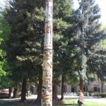 2003 Stanford Legacy Pole 40ft pole for Stanford University, Don Yeomans (Haida)