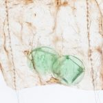 Consumed, 2017, Maureen Gruben, beluga intestine, thread, found objects, dimensions variable, SOLD